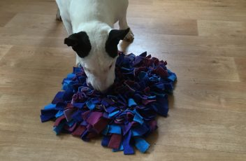 Kay 9 dog training Dorset