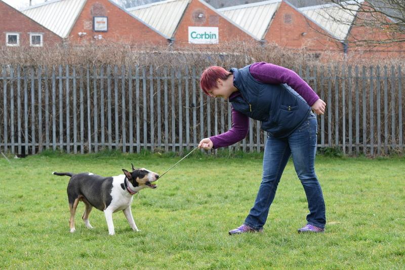Gallery Kay 9 Dog Training