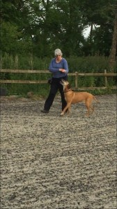 Kay 9 Dog Training - Novice Class